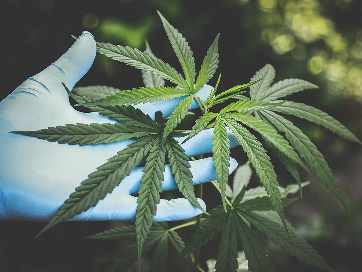 It's high time cannabis received the in-depth research attention it deserves - Highlander
